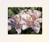 Lilies on the Lanai, matted print by Lisa Lopuck